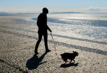 Accesso degli animali in spiaggia: normativa e giurisprudenza amministrativa.
