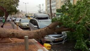 Cassazione: albero cade su un auto? La colpa è anche dell'Ente proprietario della strada