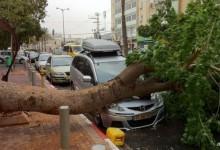 Cassazione: albero cade su un auto? La colpa è anche dell'Ente proprietario della strada.