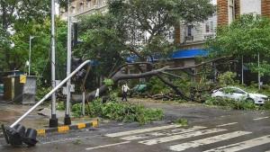Nessuna responsabilità dell'Ente custode della strada per la caduta dell'albero a causa di nubifragio.
