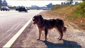 Quando l'Ente locale è responsabile del sinistro causato da cane randagio.
